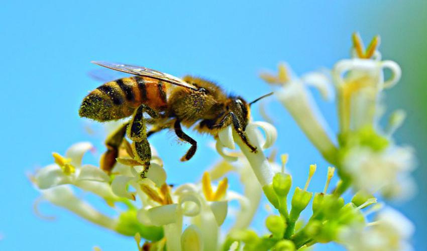 Muốn lấy mật thì đừng phá tổ ong