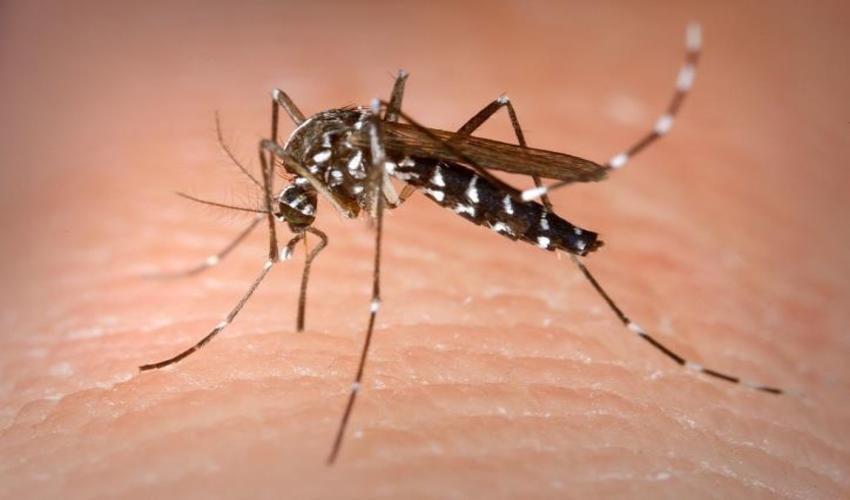 Muỗi hoạt động mạnh nhất vào thời điểm nào?