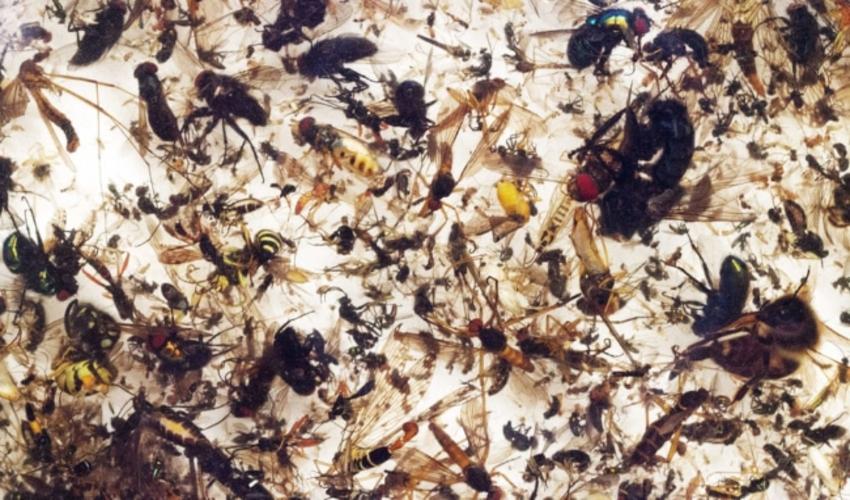 Vì sao côn trùng lại xuất hiện tại nhà bạn?